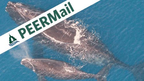 PEERMail: NOAA is Choosing Extinction