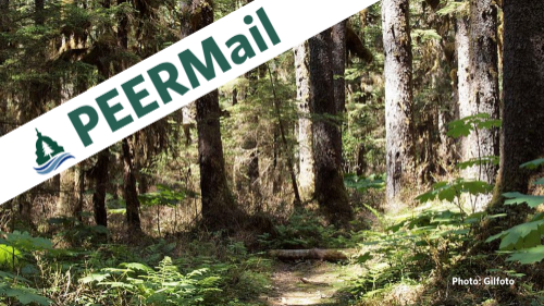PEERMail: Troubled Timber Sales at Tongass