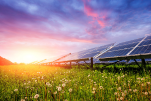 Solar panels with sunset in foreground and green pastures with flowers in foreground