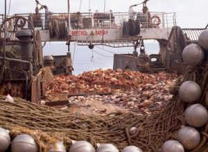 Harvesting of Bristol Bay red king crab