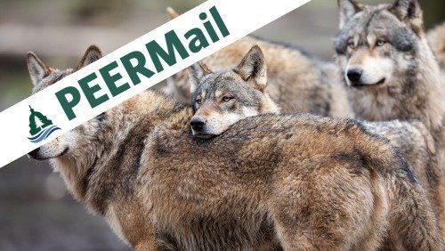 PEERMail   Stop the Senseless Slaughter